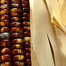 Indian Corn by Diana Forgione