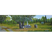 Panoramic scene from the Fauna Park, Doran Road, Bunyip Photographic Print
