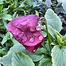 Capital Flower ~ 6 by NancyC