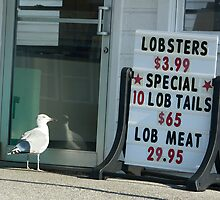 Prices are so low................even the gulls can't resist!! by lloydsjourney