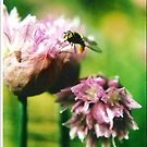 Insect on Chives by Julie Sherlock