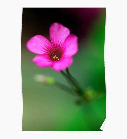 Little Pink Flower (2) Poster