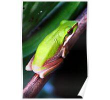 Aloe Froggie Poster