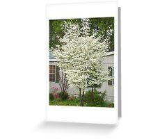 Dogwood Tree Greeting Card