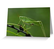 """Katydid...aka """"Green Bush Cricket"""" Greeting Card"""