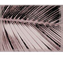 Frond Photographic Print