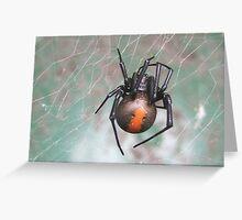 redback spider Greeting Card