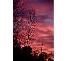 Branches to the Sky Photographic Print