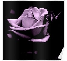 Black and White Purple Rose Poster