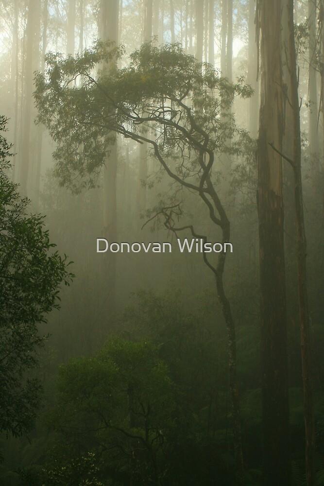 silver wattle  by Donovan wilson