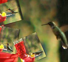 Humming Bird... by wahumom