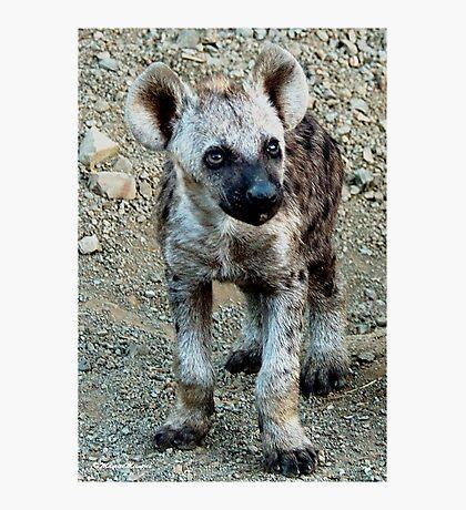 CUTE LITTLE BABY HYAENA - *Spotted Hyaena - Crocuta crocuta* Photographic Print