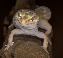 Gecko by alan tunnicliffe