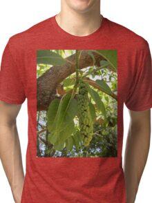 Fruit of the elephant tree Tri-blend T-Shirt