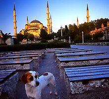 Blue Mosque stray by Gianatti6x7