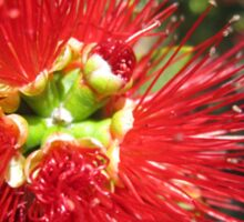 Bottle brush flower Sticker