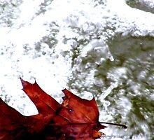 Fallen Oak. by Paul Rees-Jones