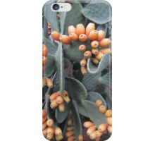 Prickly harvest iPhone Case/Skin