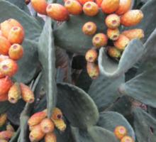 Prickly harvest Sticker
