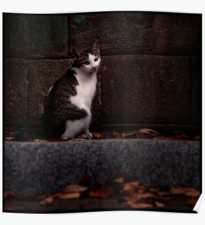 The Temple Cat; Zoshigaya, Tokyo Poster
