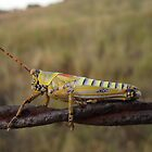 Grasshopper on barbed wire by MariaSG