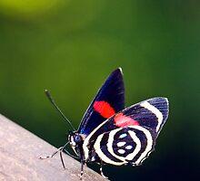 mariposa by Andrea Rapisarda