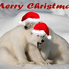 Polar Brothers - Christmas Card by Steve Bulford