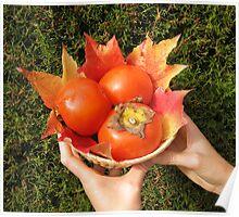 Autumnal fruits Poster