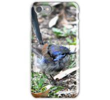 Immature male Variegated Fairy-wren iPhone Case/Skin