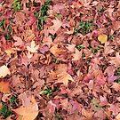 The Magic of Autumn by Valli  aka Frankiesgirl