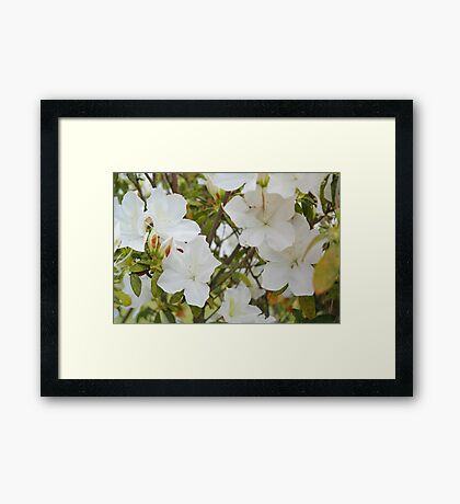 The front yard blooms Framed Print