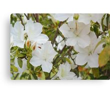 The front yard blooms Canvas Print