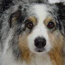 Mel in Snow by Anne Smyth