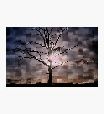 Tree & Sky Photographic Print