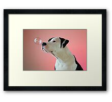 Curious Pup Framed Print