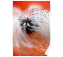 Red Clematis Seed Poster