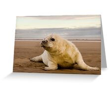 Day old Seal Pup Greeting Card