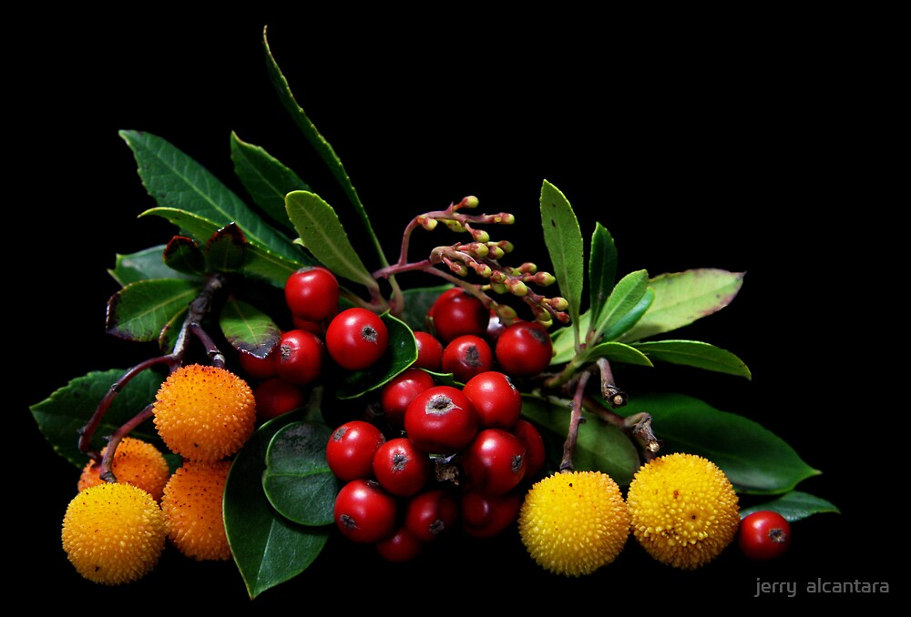 Beautiful Berries by jerry  alcantara
