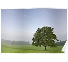 Lonely tree in a misty rural landscape Poster