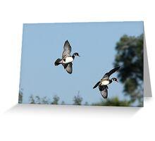 Wood Ducks Landng Greeting Card