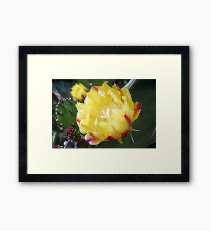 Cactus, the Flower Framed Print