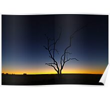 tree sunrise Poster