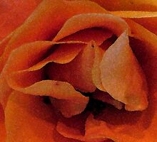 Abstract Rose  by Polly Peacock