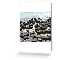 Stromatolites - Monkey Mia, WA Greeting Card
