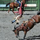Bucked Off - 2747 by BartElder