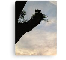 Bird on a tree Canvas Print