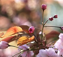 Cherry Buds by Mark Haynes Photography