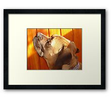 I'm Watching Something! Framed Print