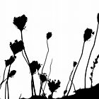 Dried Flower Heads in Silhouette by Erica Corr