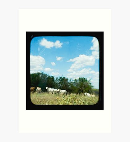 Brahman Cattle Art Print